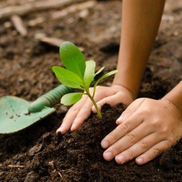 Kertészkedjünk, termesszünk növényeket együtt!